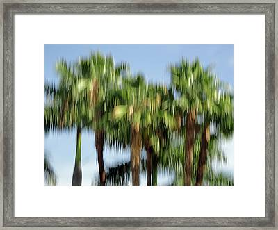 Abstract Florida Royal Palm Trees Framed Print by Juergen Roth