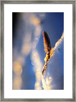 And So Is The Sun Framed Print by Rebecca Sherman
