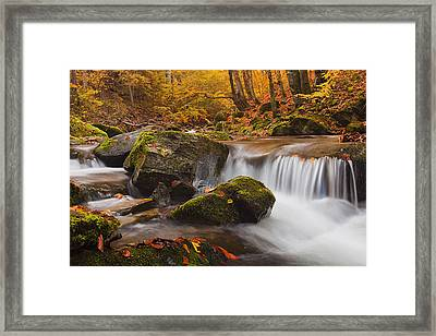 Autumn Forest Framed Print by Evgeni Dinev