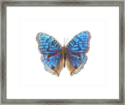 Brush-footed Butterfly Of Madagascar Framed Print by MajchrzakMorel