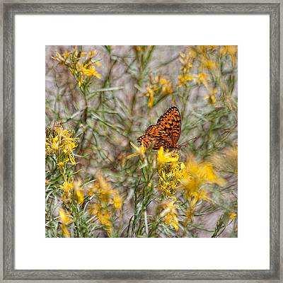 Butterfly Brunch Framed Print by Bonnie Bruno