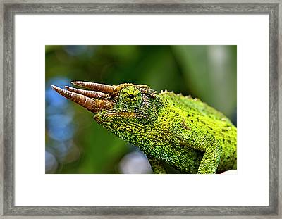 Chameleon Framed Print by Bill Adams - MomentsNow.com
