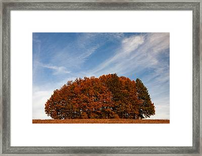 Compact Forest Framed Print by Evgeni Dinev
