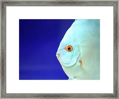 Fish Framed Print by Photography T.N.T