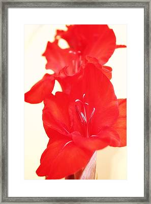 Gladiola Stem Framed Print by Cathie Tyler