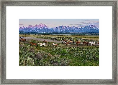Horses Walk Framed Print by Jeff R Clow