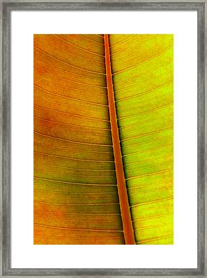 Leaf Pattern Framed Print by Carlos Caetano