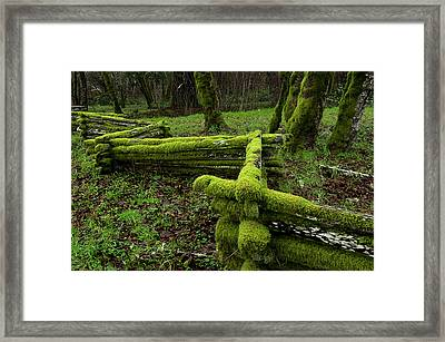 Mossy Fence 4 Framed Print by Bob Christopher