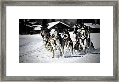 Mushing Framed Print by Daniel Wildi Photography