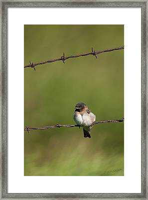 No Boundries Framed Print by Beve Brown-Clark Photography