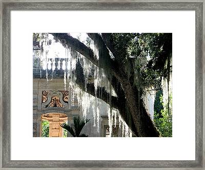 Old Tree With Hanging Thorns Framed Print by Mario Perez