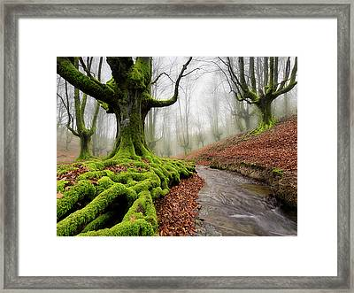River Flowering Framed Print by by MedioTuerto