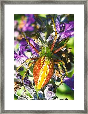 Scary Spider Framed Print by Janet Pugh