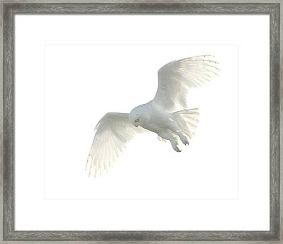 Snowy Owl Framed Print by Pat Gaines