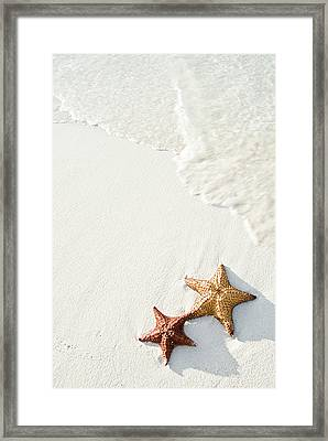 Starfish On Tropical Beach Framed Print by Mehmed Zelkovic