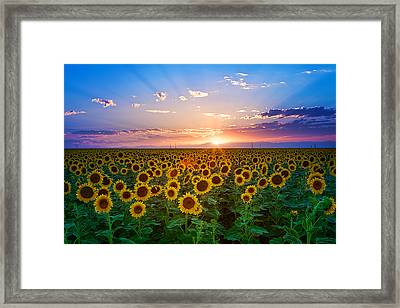 Sunflower Framed Print by Hansrico Photography