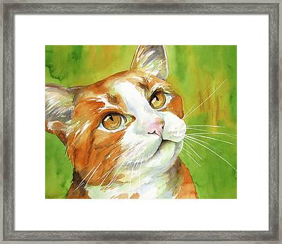 Tan And White Domestic Cat Framed Print by Cherilynn Wood