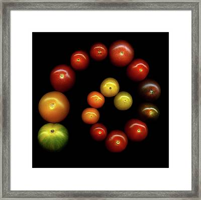 Tomatoes Framed Print by Photograph by Magda Indigo