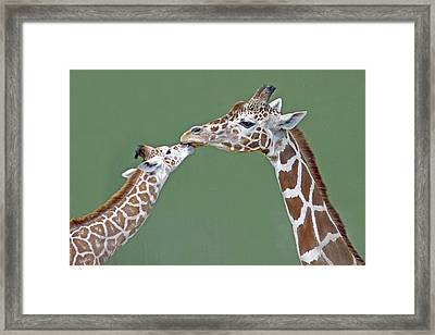 Two Giraffes Framed Print by images by Nancy Chow
