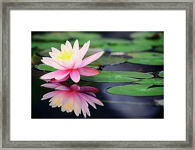 Water Lily In Lake Framed Print by Anakin Tseng