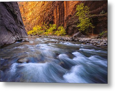 Cottonwood Row Metal Print by Joseph Rossbach