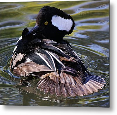 Duck Metal Print by Paulette Thomas
