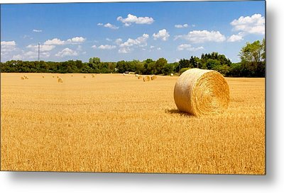 Golden Harvest Metal Print by Roger Gallamore