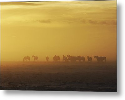 A Herd Of Horses In The Morning Fog Metal Print by Roberta Murray