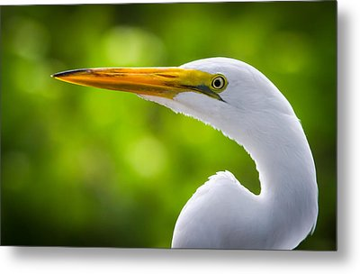 A Lighter Version Of A Snowy Egret Metal Print by Andres Leon