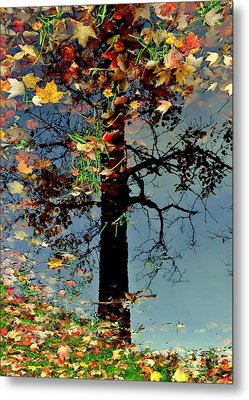 Abstract Tree Metal Print by Frozen in Time Fine Art Photography