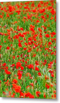 All Red Flower Beautiful Metal Print by Boon Mee