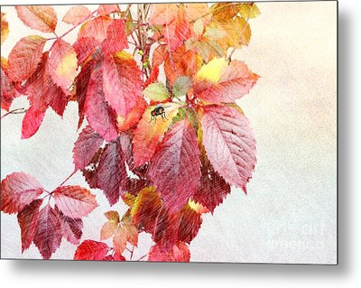 Autumn Leaves Metal Print by Liane Wright