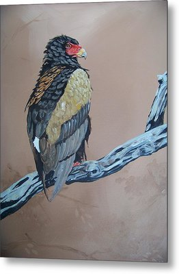 Bateleur Metal Print by Robert Teeling