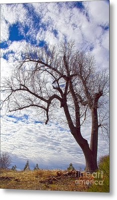 Beautiful Tree Metal Print by Molly Heng