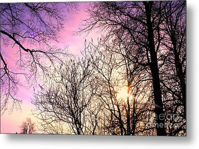 Beauty On Earth Metal Print by Michael Grubb