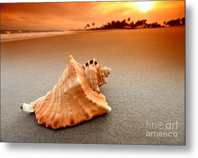 Beauty Shell Metal Print by Boon Mee