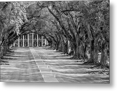 Beneath Live Oaks Bw Metal Print by Steve Harrington