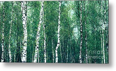 Birch Forest - Green Metal Print by Hannes Cmarits