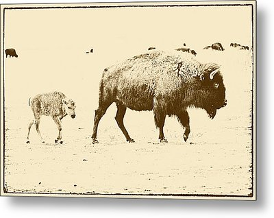 Bison Mother And Calf Metal Print by Melany Sarafis