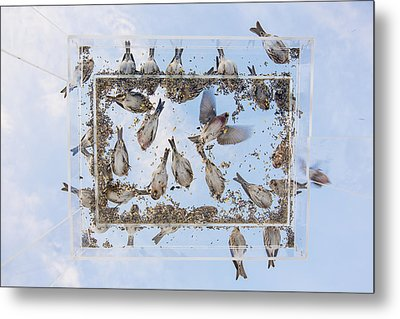 Blue Skies Above The Bird Feeder Metal Print by Tim Grams