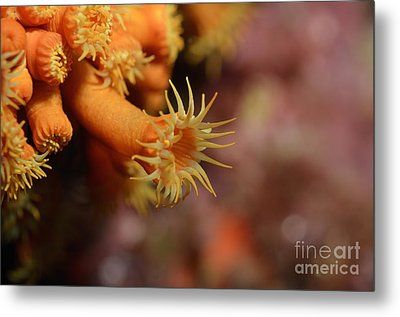Brightly Colored Yellow Encrusting Anemone Metal Print by Sami Sarkis