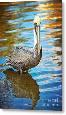 Brown Pelican Along The Bayou Metal Print by Joan McCool