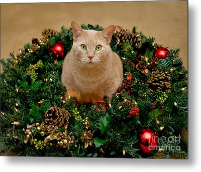 Cat And Christmas Wreath Metal Print by Amy Cicconi
