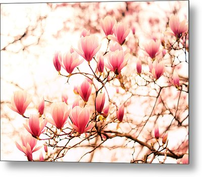Cherry Blossoms - Springtime Blush Pink Metal Print by Vivienne Gucwa