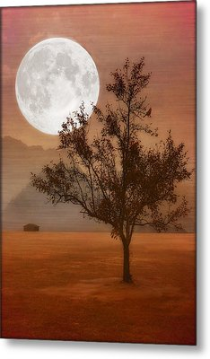 Copper Tree Metal Print by Tom York Images