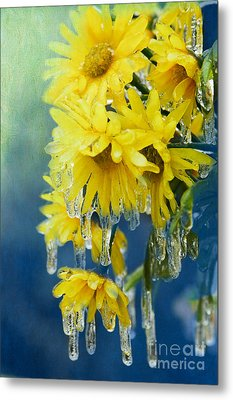 Daisies In Ice Metal Print by Betty LaRue