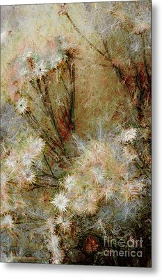Daisy A Day 22 Metal Print by Julie Lueders