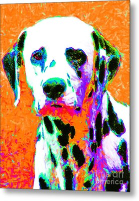 Dalmation Dog 20130125v2 Metal Print by Wingsdomain Art and Photography