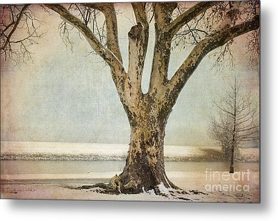 Dignity Metal Print by Betty LaRue