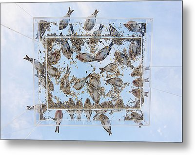 Dining In The Sky Metal Print by Tim Grams